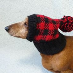 Knitted clothes dog dachshund (@dachshundknit) • Фото и видео в Instagram Dachshund Clothes, Small Dogs, Winter Hats, Crochet Hats, Handmade, Fashion, Knitting Hats, Moda, Hand Made