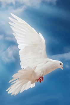 White dove images the symbol of peace pixtif pinterest quality mobiles and tablets wallpapers for your needs voltagebd Gallery
