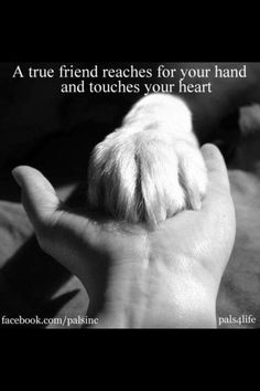 A true friend... my lab always has to be touching. he wants to just have his paw on our arm or leg.