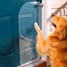 ¿Tu perro come muy rápido o se abalanza sobre ti mientras manejas cuando lo llevas en el coche? Tenemos la solución.