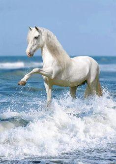 Vatten häst