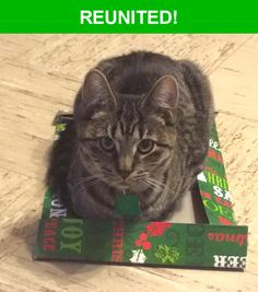 Great news! Happy to report that Jenny has been reunited and is now home safe and sound! :)