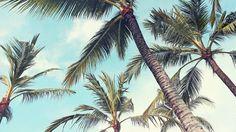 🇨🇺 Real palm Trees. No plastic! Roundtrip Diretkflüge nach Varadero ab 233€