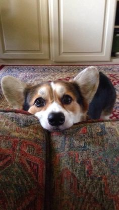 I know this face...it is the ultimate of corgi cuteness and has the power to melt hearts with a mere glance. Thanks for sharing, original pinner.