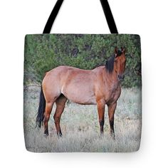 Horse Tote Bag featuring the photograph Horse At Young Arizona by Tom Janca