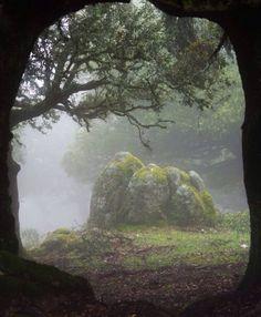 森の中の霧