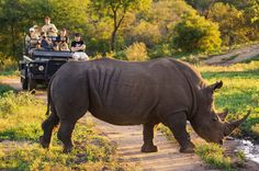 Enjoy big 5 game viewing at Kruger National Park - Best Holiday Travel Packages for South Africa Holiday Travel, Holiday Fun, Parc National Kruger, St. Lucia, Coach Tours, Safari Holidays, Game Lodge, Meeting New Friends, African Safari