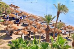 Umbrellas along the coast of Eilat, Israel