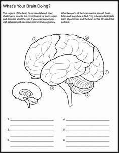 Christian Home School Hub - Brain Nervous System Neuroscience Teaching Materials Nervous System Facts, Nervous System Diagram, Brain Nervous System, Human Body Unit, Human Body Systems, Brain Anatomy, Human Anatomy, Eye Anatomy, Brain Diagram