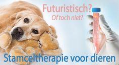 Misschien voor u nog onbekend, maar stamceltherapie voor dieren is al beschikbaar sinds 2004. De behandeling wordt bij dieren veelal toegepast bij (ernstige) vormen van artrose (degeneratieve artrose, artrose gerelateerde aandoeningen, vormen van heupdysplasie etc.) en bij pees- en aanhechtingsproblemen. Wat is stamceltherapie nu precies en hoe past u dit toe in uw eigen praktijk? In dit artikel een overzicht over stamceltherapie voor dieren. http://www.vetvisuals.com/nl_NL/introductie