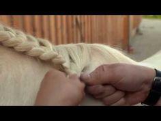 Bodenarbeit - Grundlagen - Tipps zum Pferd