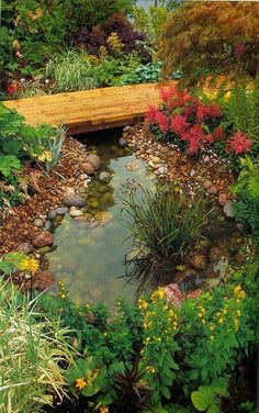 small pond with crossover