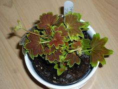Vancouver Centennial Vancouver, Plants, Plant, Planets