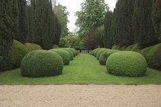 /\ /\ . Jake Hobson . cloud pruning & organic topiary . box blobs