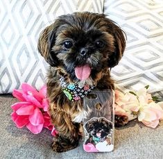Bailey is definitely the cutest pup in town! wanna Cuddle you all day long darling! Animal Phone Cases, Dog Phone, Highest Resolution Picture, Pet 1, Silicone Phone Case, Cute Little Animals, Dog Owners, Pet Portraits, Dog Life