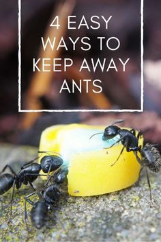 4 easy ways to keep away ants - #2 is genius! Pest Control | Home Remedies for Ants