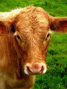 Dicas pra se tornar vegano - muito úteis no meu momento.