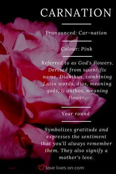 Flower Meanings Funeral Ideas For 2019 Meanings … - Modern Carnation Flower Meaning, Carnation Flower Tattoo, Carnation Colors, Flower Bouquet Tattoo, Pink Carnations, Tattoo Flowers, Meaning Of Flowers, Carnation Bouquet, Funeral Flower Arrangements