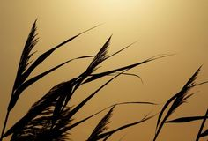 "Check out my art piece ""Dancing At Sunset"" on crated.com - Puslinch Ontario Canada #art #photography #grass #sunset"