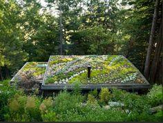 feldman architecture green roof succulents