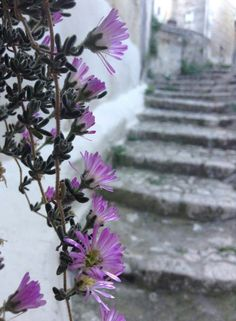 Pathway in Matera