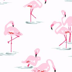Shop | Category: Flamingoes | Product: Flamingoes Flamingo White
