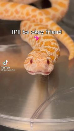 Cute Little Animals, Cute Funny Animals, Funny Cute, Really Funny, Animal Jokes, Funny Animal Memes, Funny Animal Videos, Cute Reptiles, Cute Snake