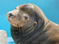 Sausalito's Marine Mammal Center - Free Tours