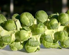 Brussels Sprouts Roasted on the Stalk | All recipes with Trader Joes products for easy, quick, healthy meal ideas