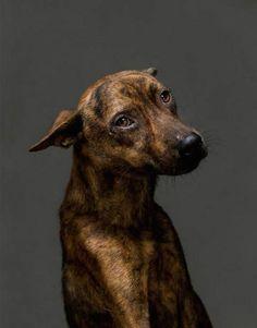 Sollozos y ladridos: así es el corredor de la muerte canino