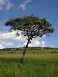 תוצאת תמונה עבור tree pictures.com