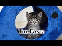 The Fonts, 2017-02-05 - YouTube