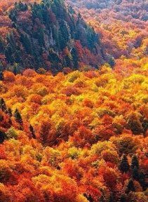 12 Amazing Fall Getaways To See Fall Foliage - - - These fall getaways are some of the best locations you can travel to around the world to see the fall foliage this autumn! Autumn Nature, Autumn Forest, Poster Print, New England Fall, Autumn Scenes, Panoramic Images, Best Location, Amazing Nature, Bulgaria