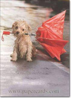 """They said a LITTLE rain. They said LIGHT winds. Ppfffttttt."" #Dog #Pet #Umbrella #Humor"
