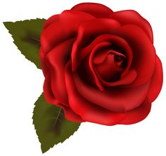 Beautiful Red Rose Transparent PNG Clip Art Image