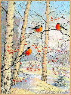 Birds Anim