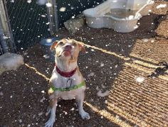 One community came together so this dying dog could be granted a very big wish. Snow Machine, Sick Dog, Dog Stories, Photo Story, Animals And Pets, Wish, Pitbulls, Community, Big Dogs