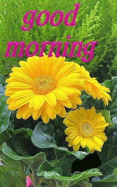 Yellow Flower Good Morning Quote morning good morning good morning quotes good morning images good morning quotes and sayings Gud Morning Pics, Good Morning Happy Sunday, Good Morning Cards, Good Morning Picture, Good Morning Greetings, Morning Pictures, Good Morning Wishes, Happy Monday, Good Morning Flowers Quotes