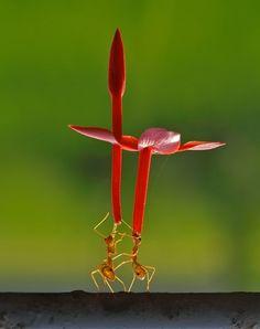 flower's dance by teguh santosa, via 500px