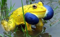wildlife-experience:  Wildlife Natural Wonders