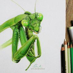 Mantis By Chloe O'Shea