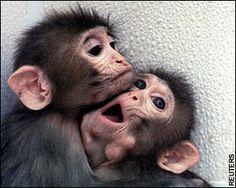 <3  #monkey blog #ape blog #cute #adorable #hug #love