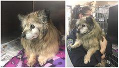 Su historia que se volvió viral pero nadie adoptó al pequeño perro, hasta que una mujer vio la foto y corrió a salvarlo