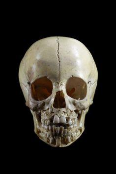 ✯ Child's Skull .. Ryan Matthew's Collection .. Photo By Sergio Royzen✯
