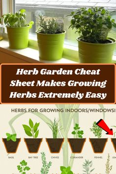 #Herb #Garden #Cheat #Sheet #Growing #Extremely #Easy Growing Herbs, Almond Nails, Fresh Herbs, Herb Garden, Birthday Decorations, Cheating, Eye Makeup, Planter Pots, Backyard