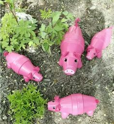 Flower pot pigs...