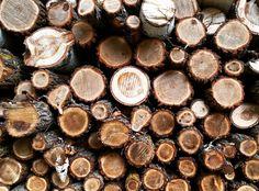 'Tis the #season for chopping firewood.