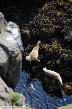 'Hello Darling!', Isle of May, Scotland // more impressions on www.bergfolio.de/scotland