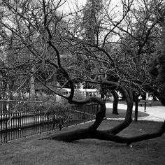 Cambio de dirección... Mas fotos e historias en #imagenesquedicen en #facebook #arbol #tree #park #parque #lisboa #cambio #change #dirección #direction #instagram #instapic #instadaily #instagood #picture #pictureoftheday #pic #picoftheday #picofmylife #cute #love #life #follow4follow #follow