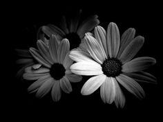 monochrome-kartinki-smeshnye-kartinki-fotoprikoly_23911007352.jpg (1024×768)